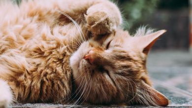 Photo of 4 Benefits Of Giving CBD Treats To Your Cat
