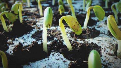 Photo of How Do Seeds Germinate?