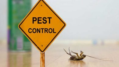 Photo of Top 5 Trending Pest Control in Johannesburg