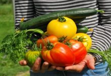 Photo of Growing Matters: 8 Veggies to Grow in Your Garden