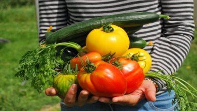 Photo of Growing Matters: 8 Veggies to Grow in Your Garden