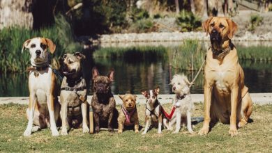 Photo of HOW TO FIND THE PERFECT DOG SUPPLIES ONLINE?