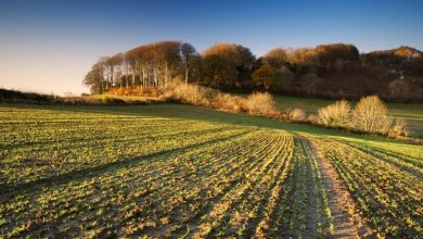 Photo of Challenges and Changes: The UK Farming Industry