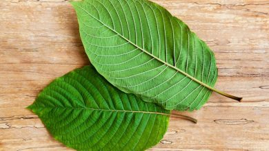 Photo of Kratom in the most original form from the five best kratom vendors