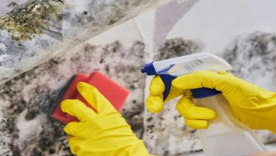 Photo of Mold and Dampness: What Are Their Health Risks and How to Prevent Them?
