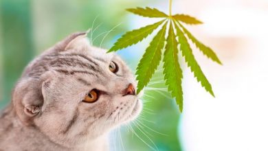 Photo of What Should You Consider When Buying CBD for Cats With Anxiety?